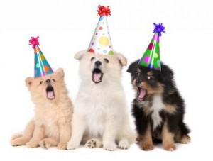 puppyparty facebook